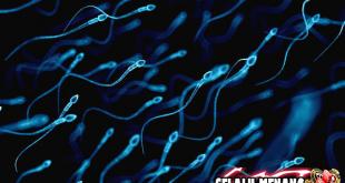Beberapa Makanan Yang Bisa Bikin Sperma Berkualitas