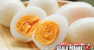 Telur Dari Ayam Yang Sering Berkeliaran Lebih Bervitamin