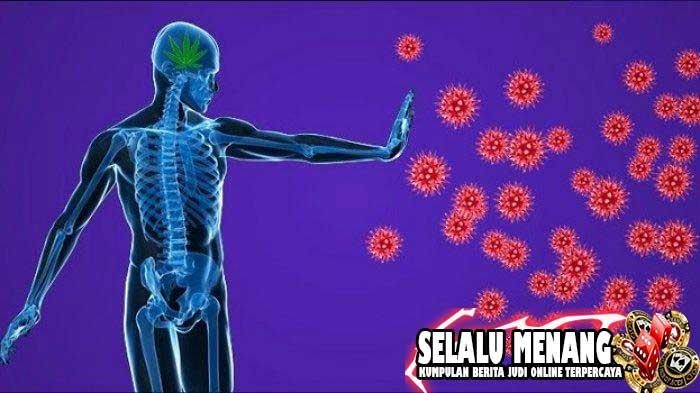 Beberapa Cara Meningkatkan Imunitas Tubuh